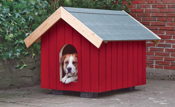 dog-house